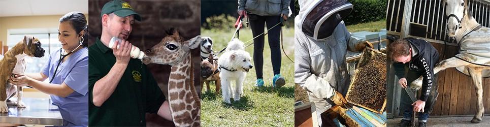 Quel métier avec les animaux est fait pour moi ?