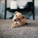 Faire garder son chien – Quelles solutions et à quel prix ?