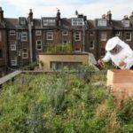 Pourquoi installer des ruches en ville n'est pas une si bonne idée