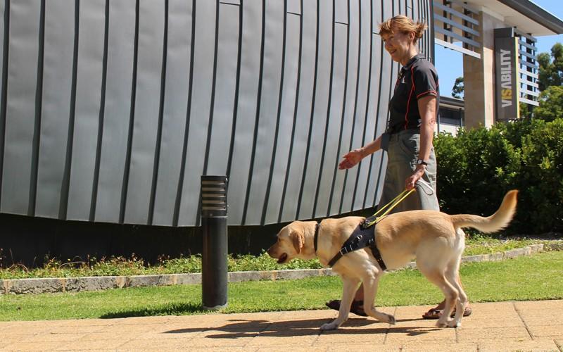 éducateur de chien d'aveugle