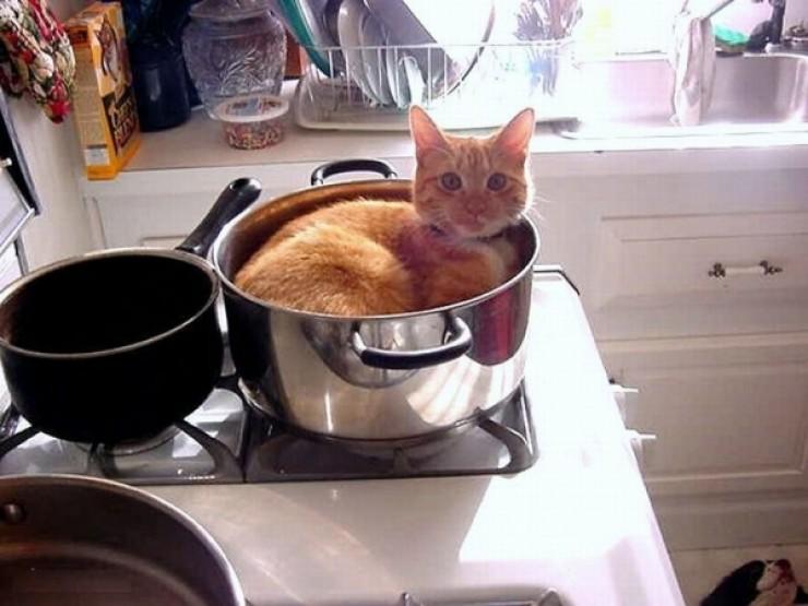 casserole chat