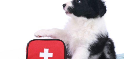 Premiers secours pour le chien – Les gestes à connaître