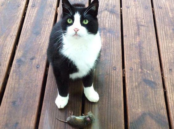 chat rapporte proie