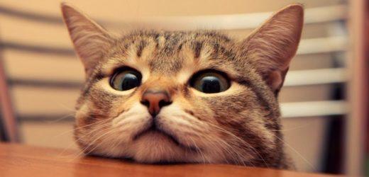 Vidéos de chats drôles : pour embellir votre journée