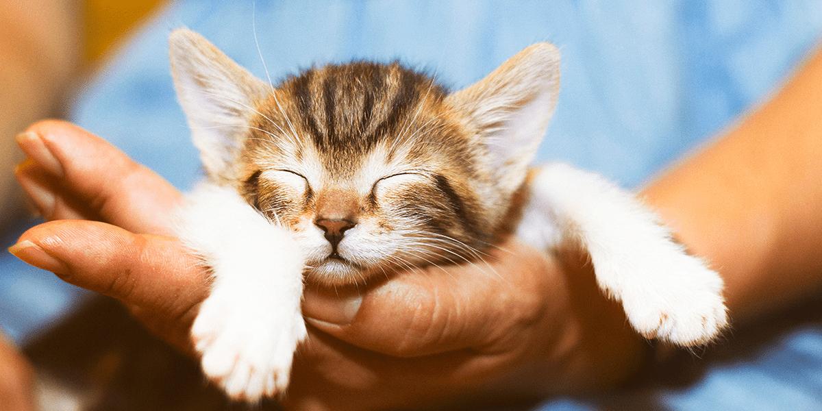 Nom de chat, comment le choisir ?