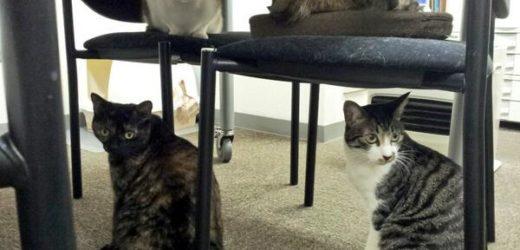 Une entreprise japonaise adopte des chats errants pour apporter du bonheur
