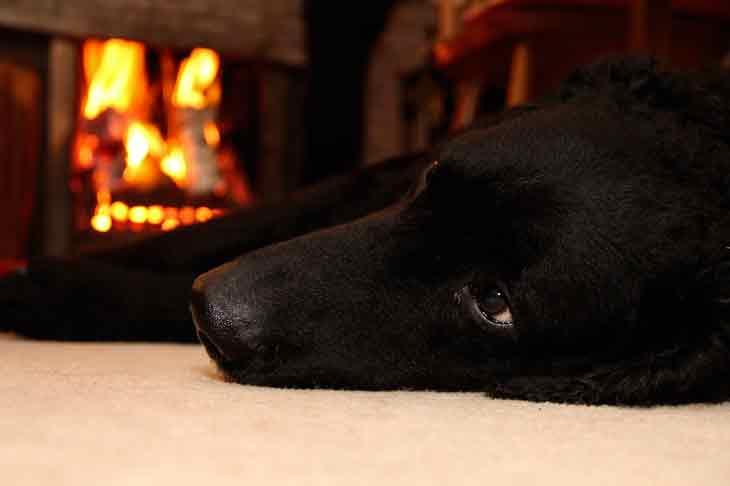 Les dangers de la maison pour nos animaux – les détecter