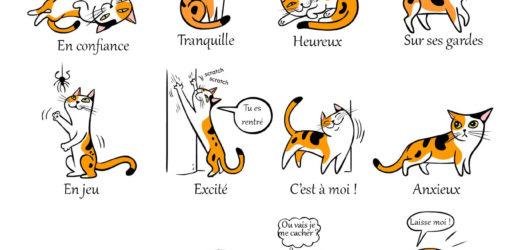 Le comportement du chat – Décodez leur langage et communiquez