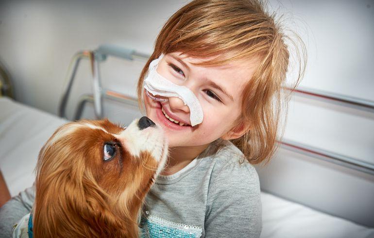 Mon chien à l'hôpital, une bonne idée ?