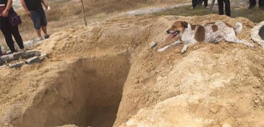 Ce chien a suivi le cortège funèbre de sa défunte maîtresse sur près de 2km