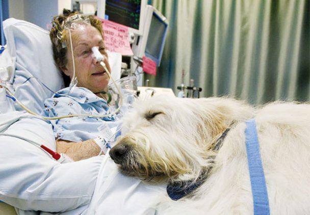 hôpital chien