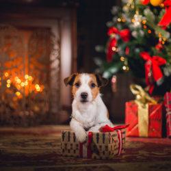 7 cadeaux à offrir à votre chien pour passer un joyeux noël