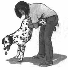 gros chien manoeuvre de heimlich