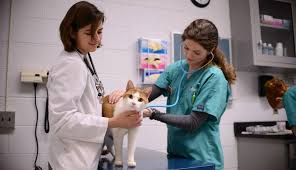 travailler avec les animaux auxiliaire vétérinaire