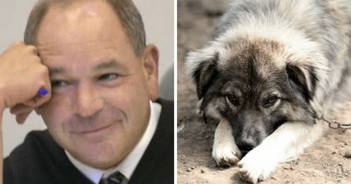 Ce juge qui prononce des sentences originales aux coupables de cruautés envers les animaux