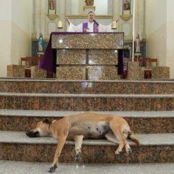 Un prêtre accueille les chiens errants à l'église pour les faire adopter