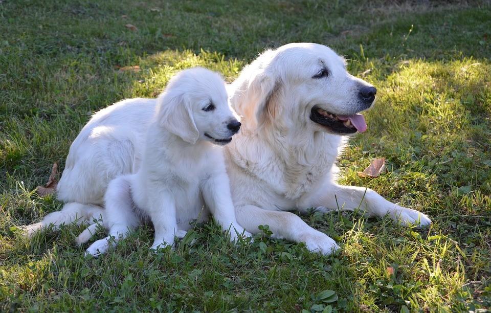 Choisir un nom de chien en p ou q en 2019