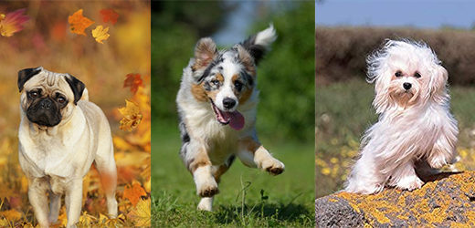 [Test] Quelle race de chien me correspond ?