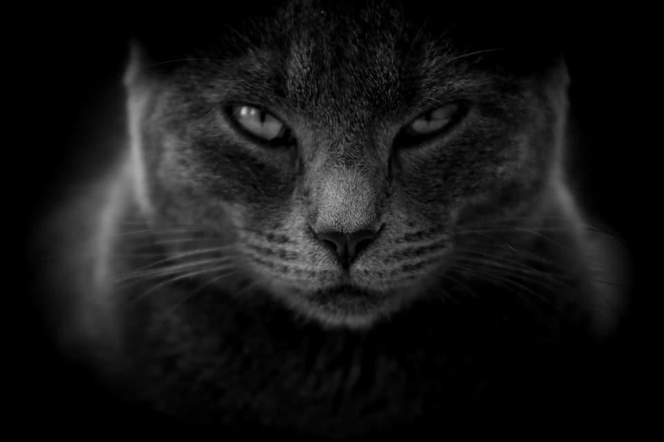 Rêver de chat, quelles interprétations et significations ?
