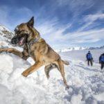 L'histoire de Sonni, ce chien abandonné devenu sauveteur en montagne