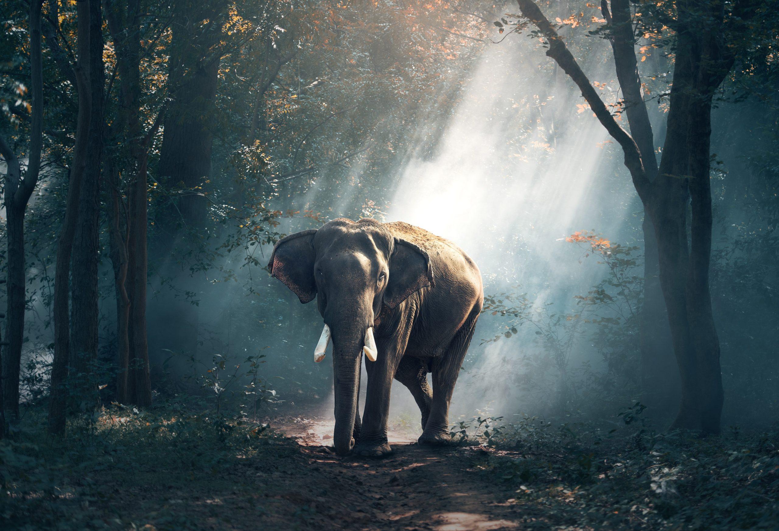 Fonds d'écran gratuits pour les amoureux des animaux