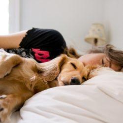 Dormir avec son chien, un rituel bénéfique mais à quel prix ?